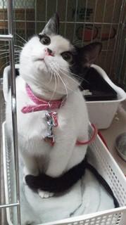 ミルク 猫