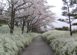 aichiryokuka.jpg