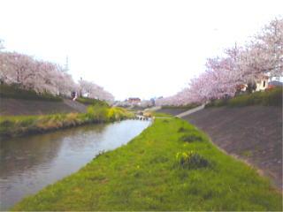 asakuragawa2.jpg
