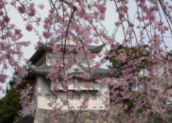 nagoyajou.jpg