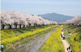 sabagawa2.jpg