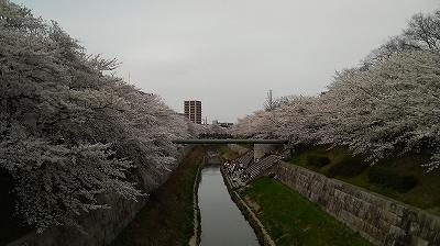 yamazakigawa_p.jpg
